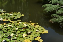 HuntingtonBotanic_2990