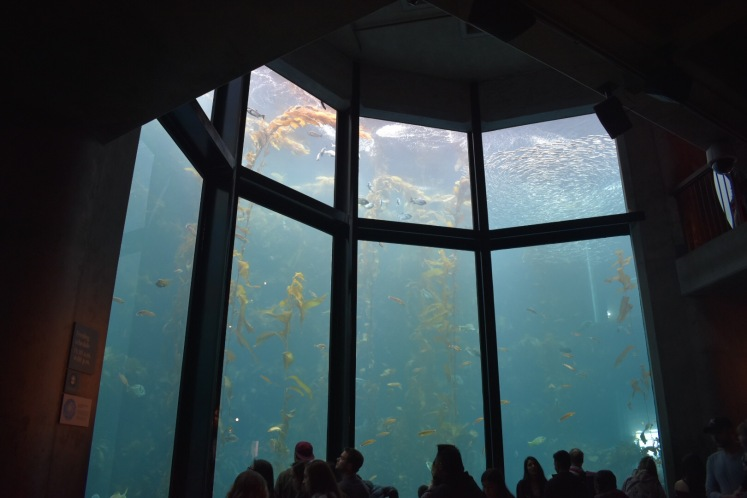 MontereyBayAquarium2018_7766